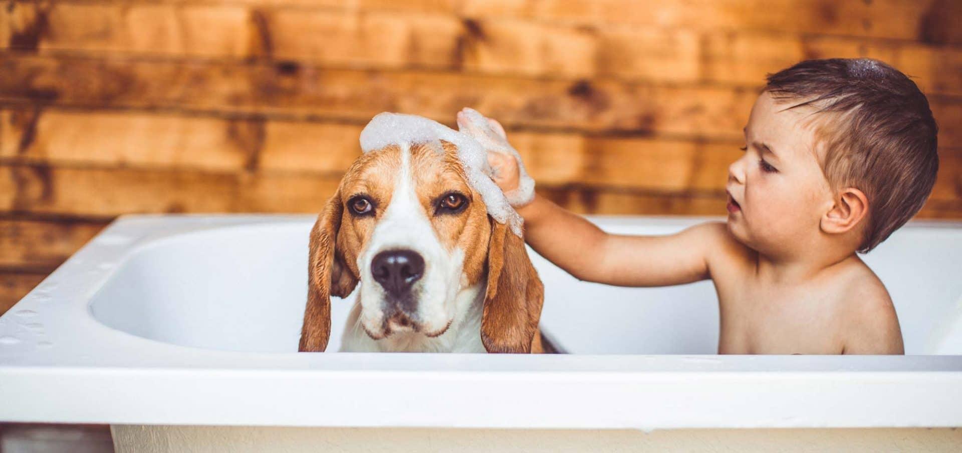 Shampoo en haaruitval